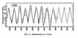 lynx-web